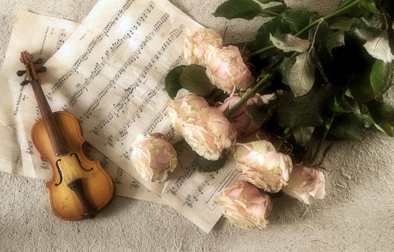 Обои для рабочего стола скрипка Ноты Букеты Розы Цветы Музыкальные инструменты Скрипки букет роза цветок