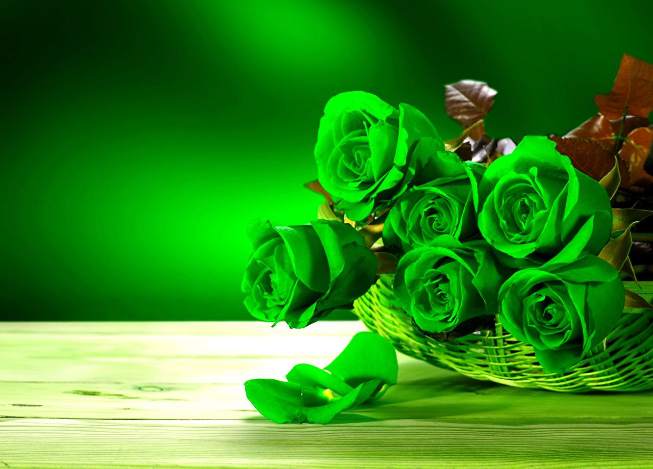 Фотография Розы зеленые лепестков Цветы вблизи роза зеленых Зеленый зеленая Лепестки цветок Крупным планом