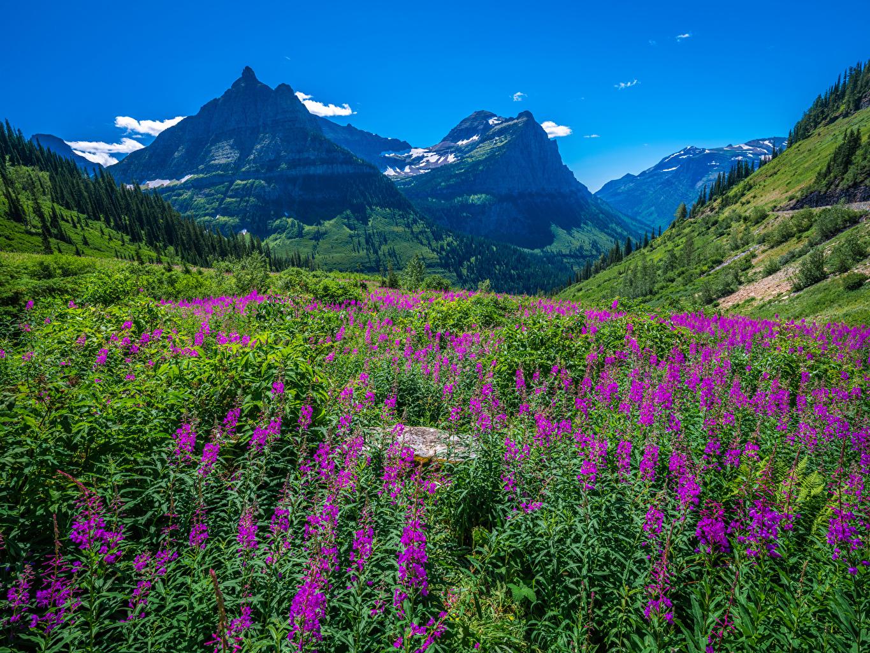 Фотография Вашингтон штаты Glacier National Park Горы Природа парк США америка гора Парки