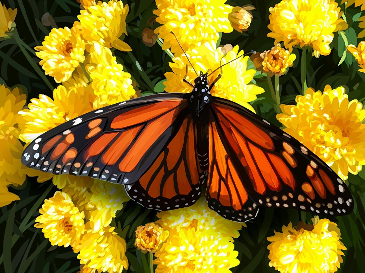 Обои для рабочего стола Данаида монарх Бабочки вблизи животное бабочка Животные Крупным планом