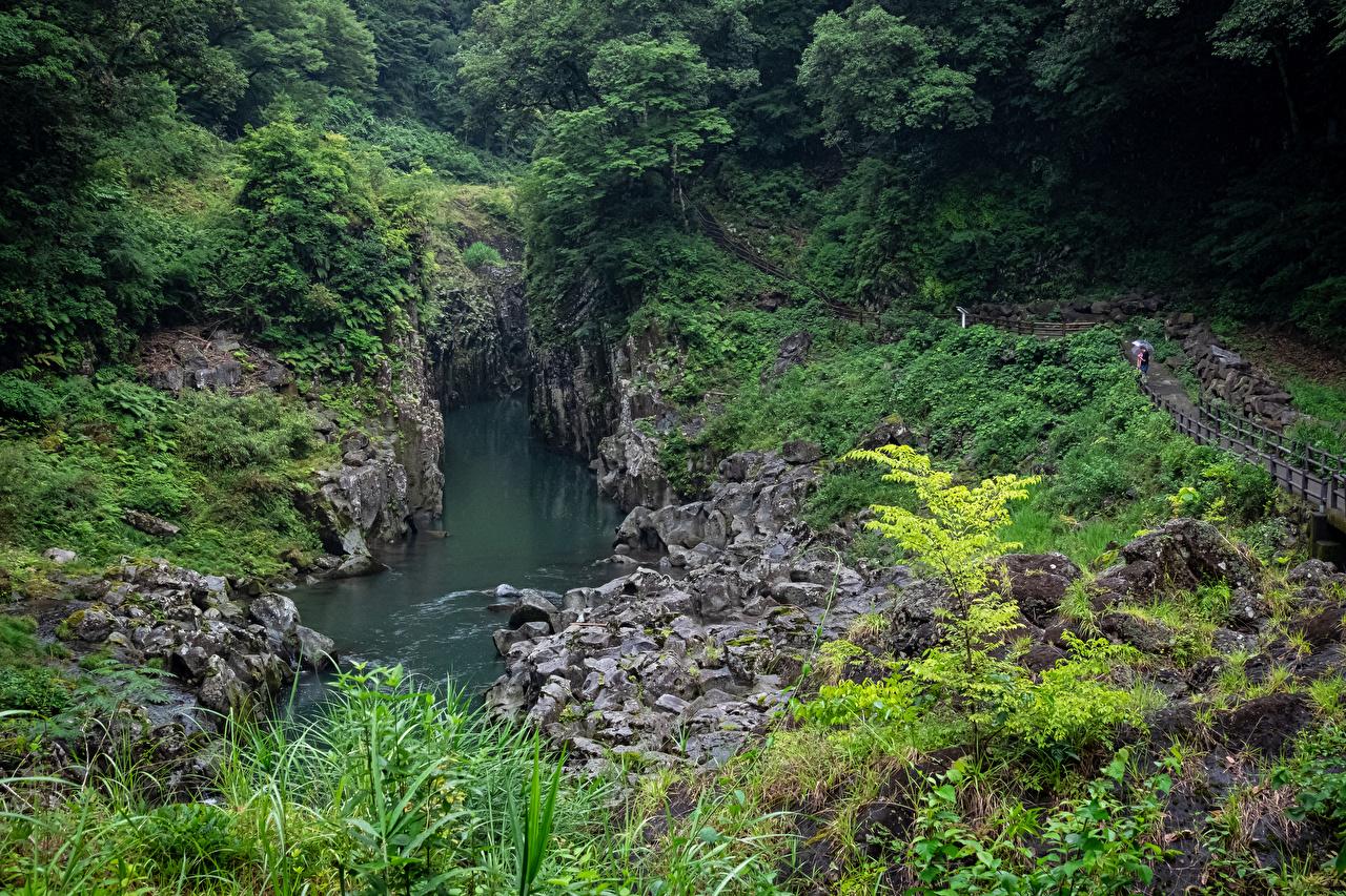 Фотография Япония Takachiho Gorge скалы Природа река деревьев Утес скале Скала Реки речка дерево дерева Деревья