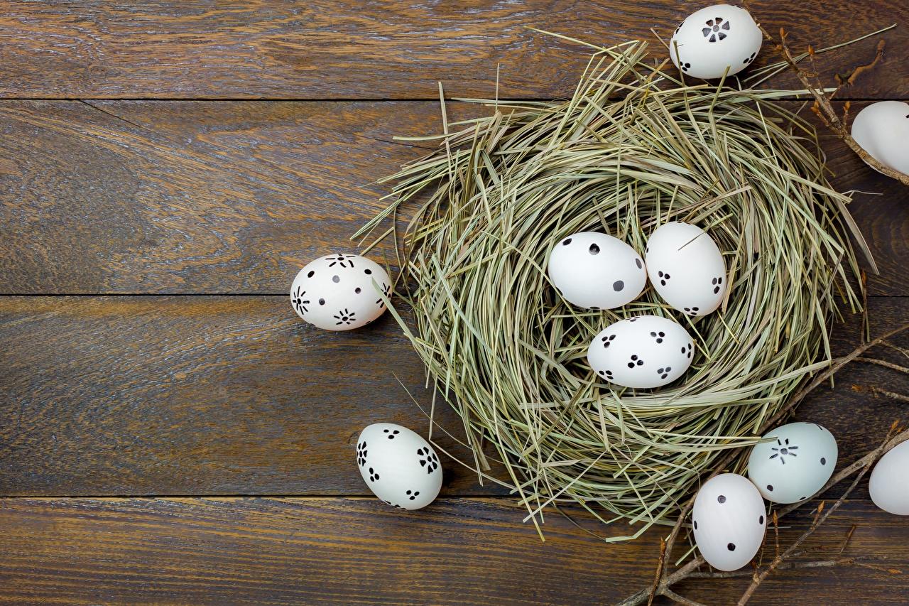 Фотография Пасха яиц гнезде Доски яйцо Яйца яйцами гнезда Гнездо