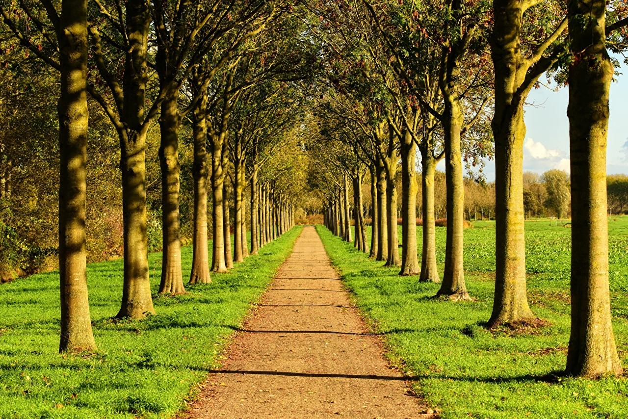 Картинки Лето аллеи Природа Дороги Трава дерево Аллея траве дерева Деревья деревьев
