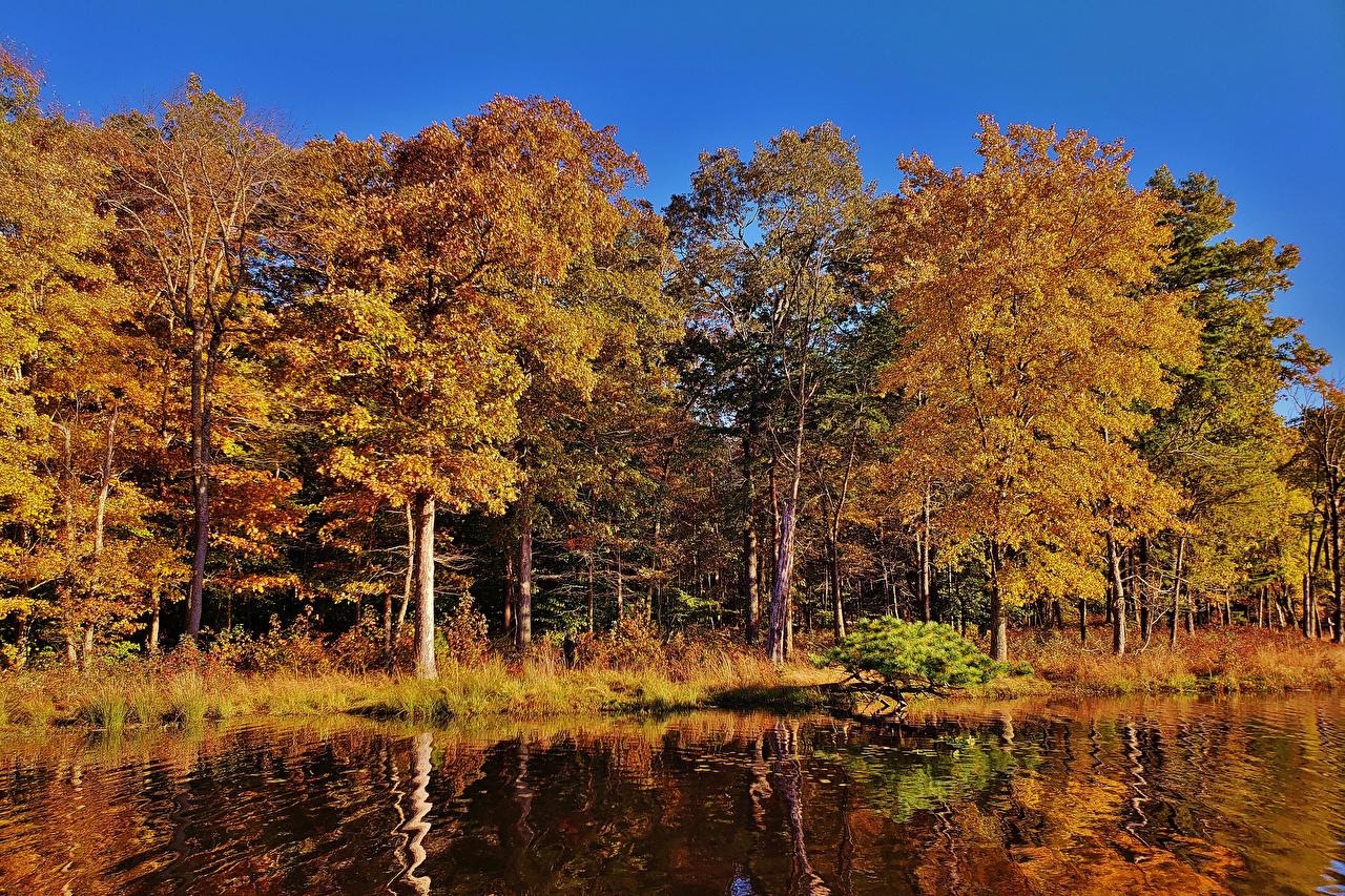 Фото США Maryland Redington Lake Осень Природа Леса Озеро дерево штаты осенние дерева Деревья деревьев