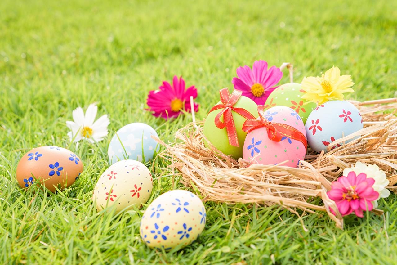 Фотографии Пасха яиц Гнездо траве яйцо Яйца яйцами гнезда гнезде Трава