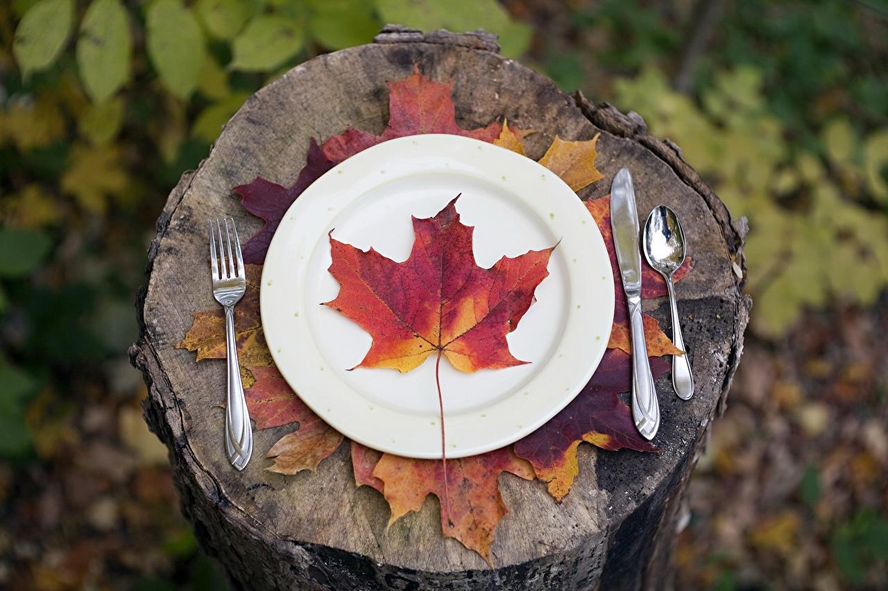 Фотография Листья Нож Клён Пень Тарелка Вилка столовая лист Листва ножик клёна клёновый пне вилки тарелке