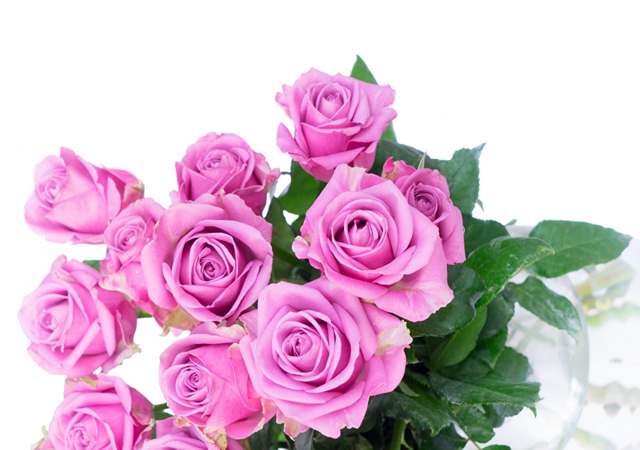 Обои для рабочего стола Букеты роза Розовый цветок Белый фон букет Розы розовых розовая розовые Цветы белом фоне белым фоном