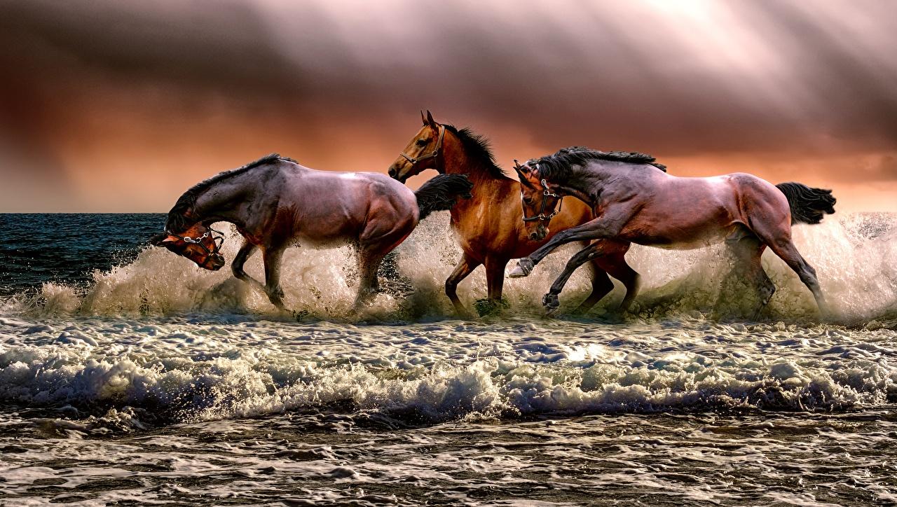 Фотографии Лошади бежит Волны Брызги втроем животное лошадь Бег бегущий бегущая с брызгами три Трое 3 Животные