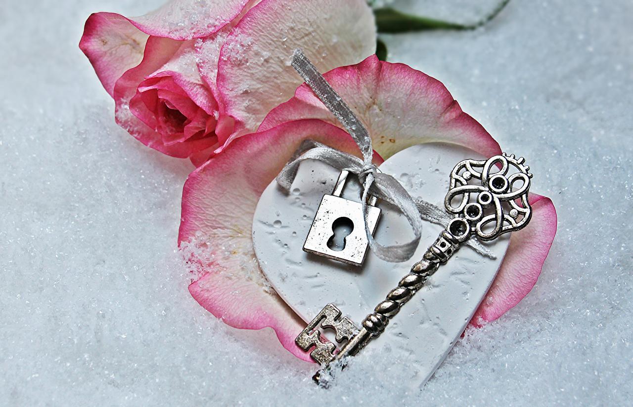 Картинка День всех влюблённых серце роза Розовый Цветы ключом сером фоне День святого Валентина Сердце сердца сердечко Розы розовых розовая розовые цветок ключа Замковый ключ Серый фон