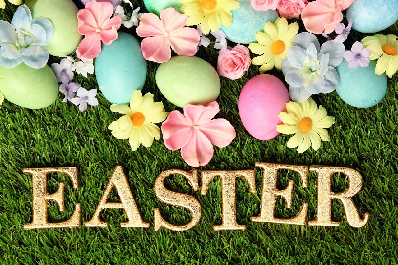 Фотографии Пасха Английский яйцо слова английская инглийские яиц Яйца яйцами текст Слово - Надпись