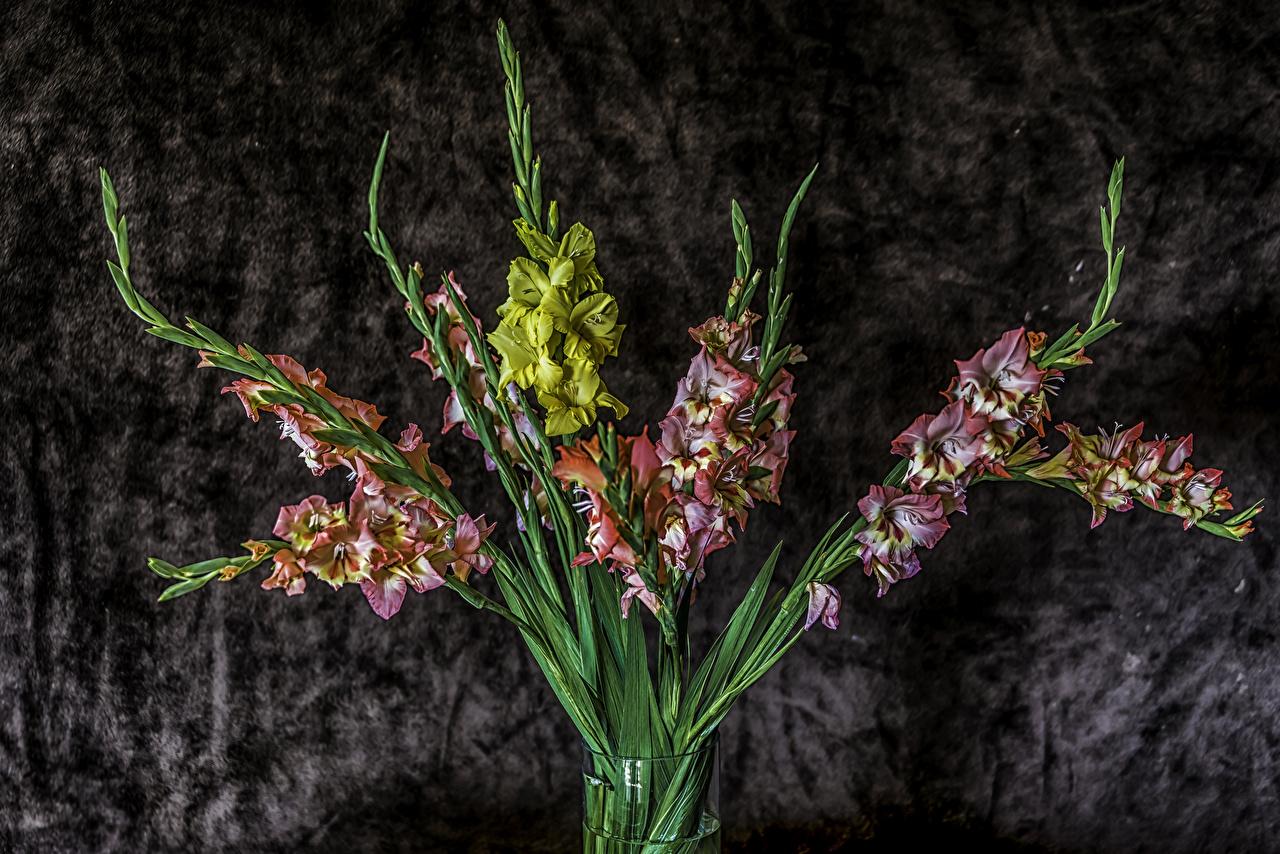 Фото Цветы Гладиолусы