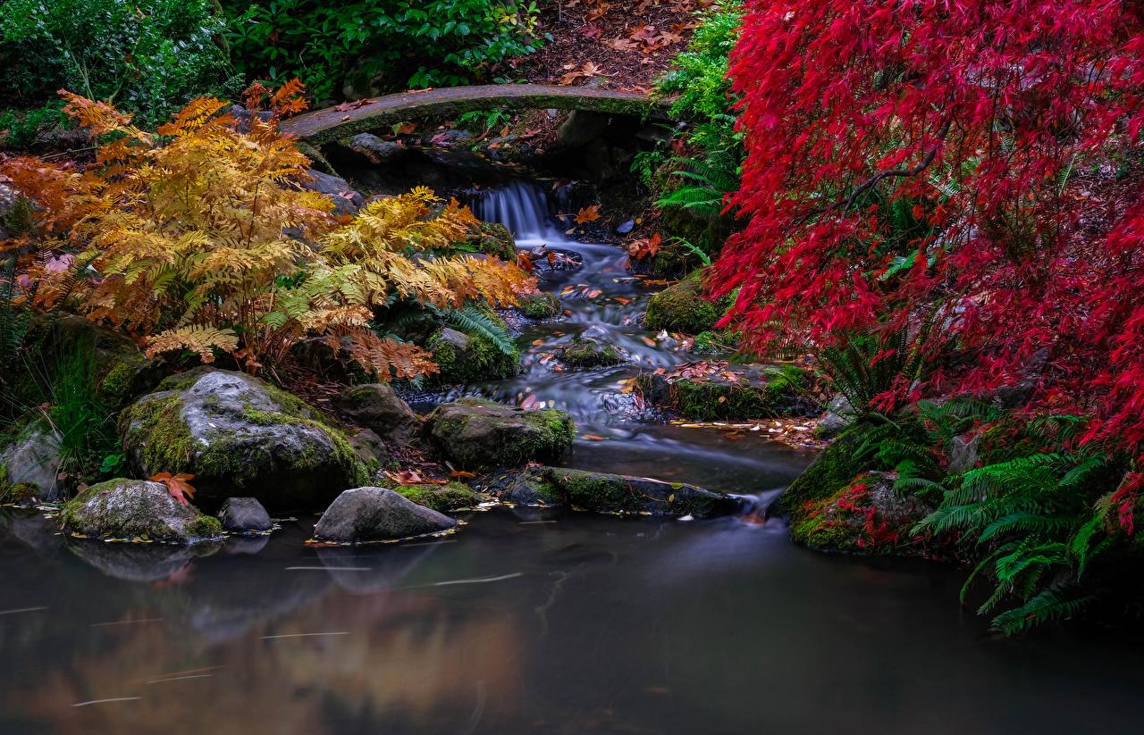 Картинки Сиэтл США лист Kubota Gardens Осень Природа Водопады парк Мох Ветки Камень штаты Листва Листья америка осенние Парки мха мхом ветка ветвь Камни на ветке