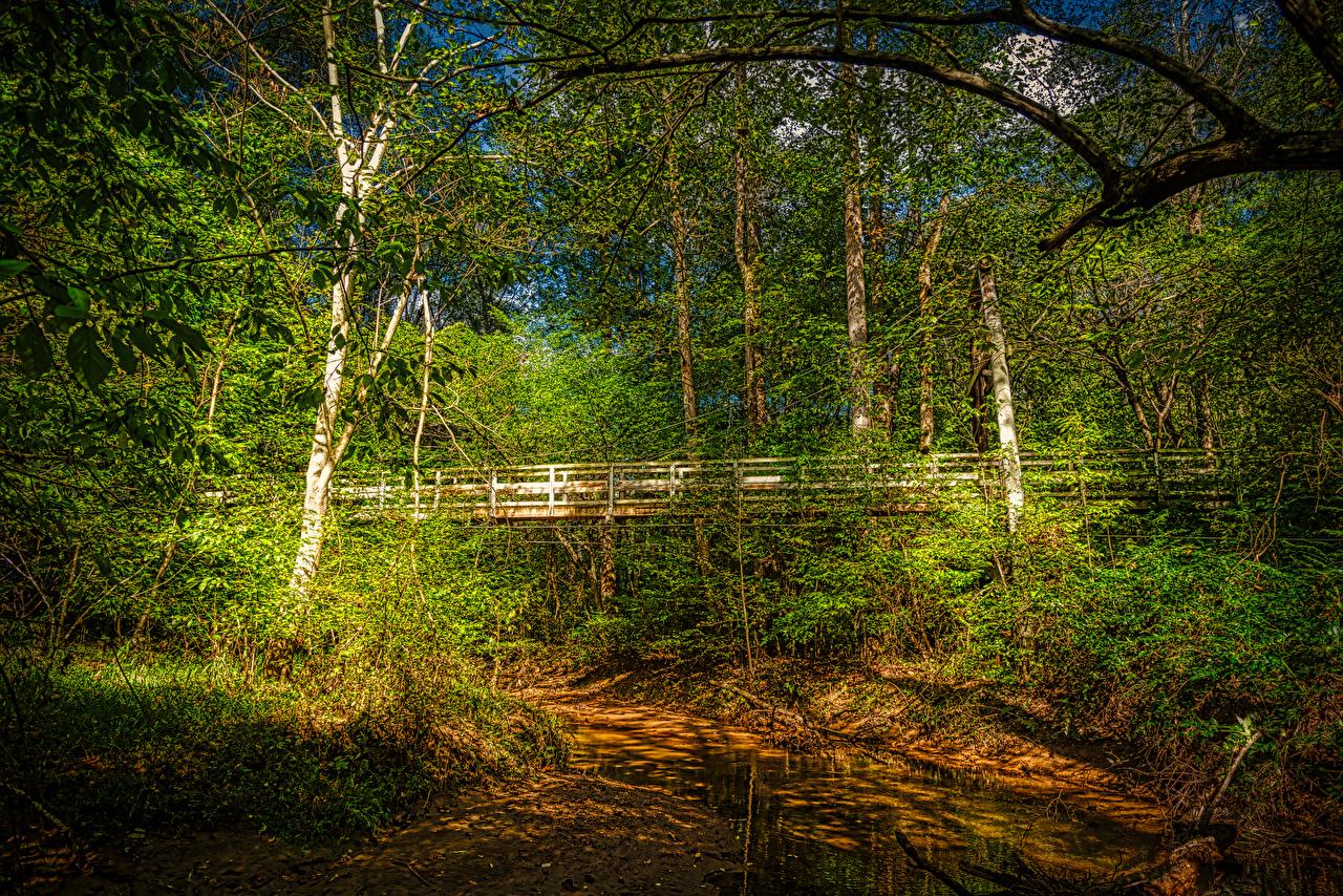 Фотографии Калифорния штаты Walnut Creek Мосты Природа Леса речка деревьев калифорнии США Реки дерево дерева Деревья