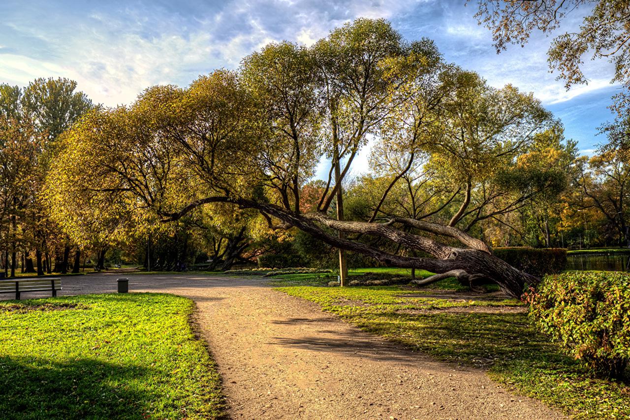 Фотография Санкт-Петербург Россия Park Ekaterinhof Осень Природа парк Деревья осенние Парки дерево дерева деревьев