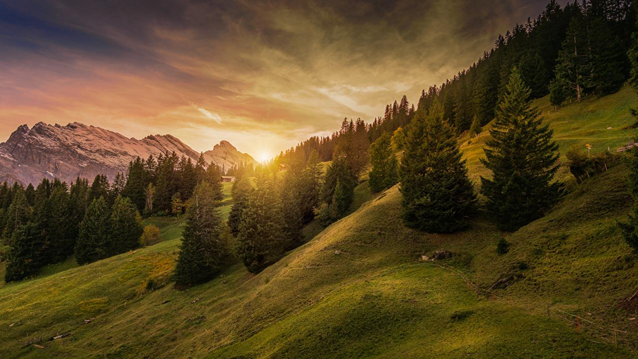 Фотография Альпы Швейцария Mürren, Lauterbrunnen Ель Горы Природа рассвет и закат мха альп ели гора Рассветы и закаты Мох мхом