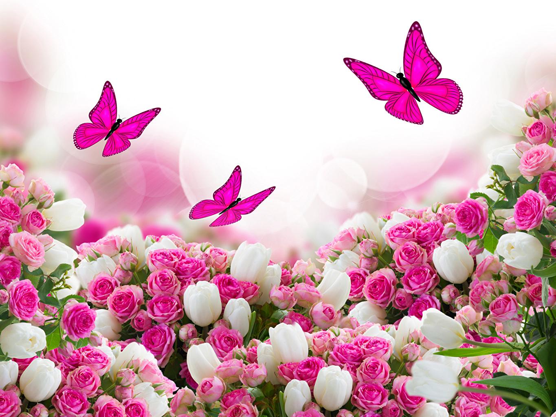 Фото Бабочки Розы Тюльпаны Цветы Много
