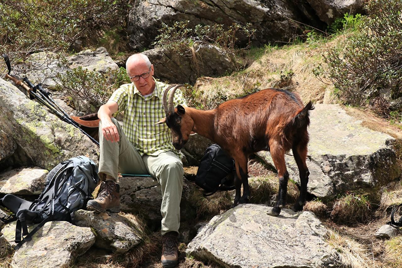 Фото Коза козел мужчина Старик Рога сидя Камень Животные Мужчины старый мужчина пожилой мужчина с рогами Камни Сидит сидящие животное