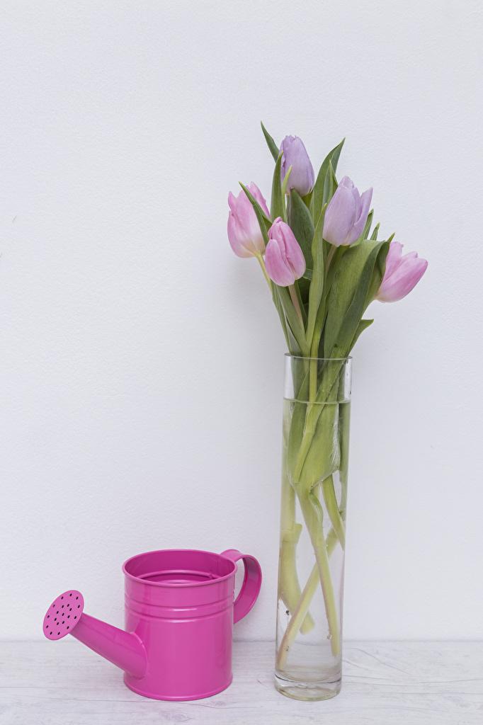 Обои Тюльпаны цветок Ваза Серый фон Цветы вазы вазе сером фоне