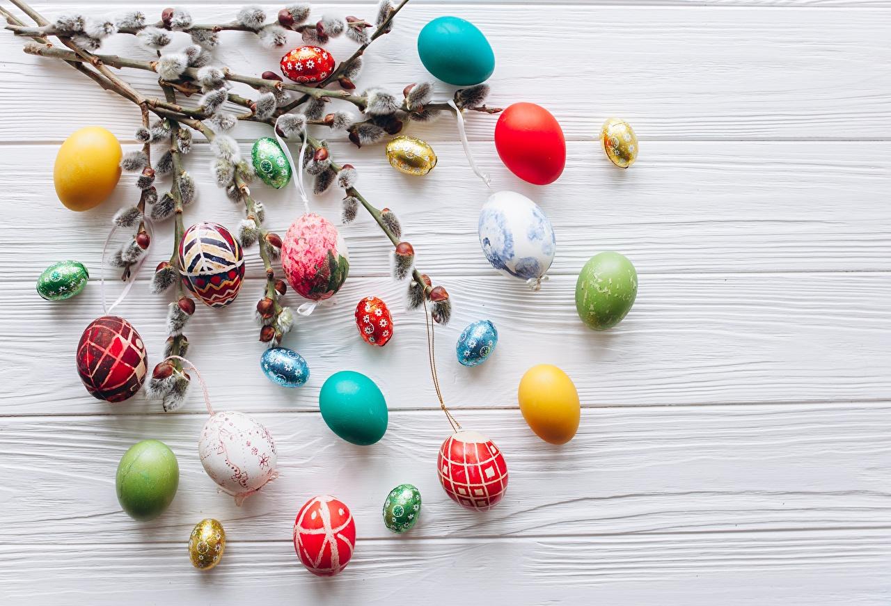 Картинка Пасха Яйца ветка Доски яиц яйцо яйцами ветвь Ветки на ветке