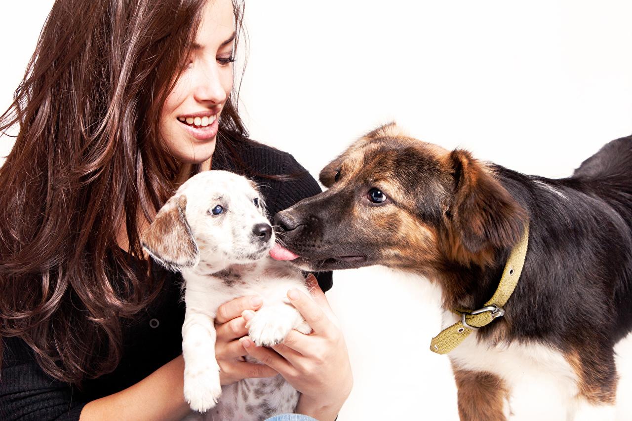 Фотографии Щенок Собаки шатенки улыбается 2 молодые женщины животное белым фоном щенки щенка щенков собака Шатенка Улыбка два две Двое вдвоем Девушки девушка молодая женщина Животные Белый фон белом фоне