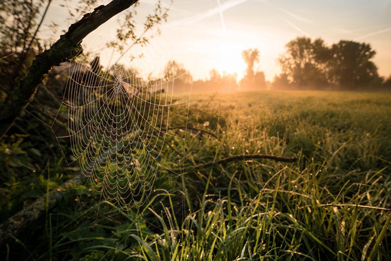 Фотография паутине Природа Утро Трава паутин Паутина паутиной траве