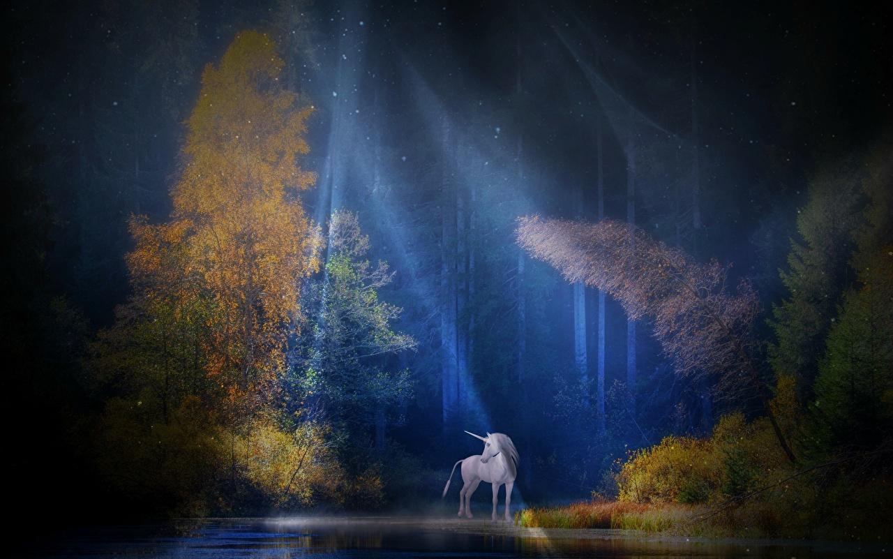 Фото Лучи света Единороги Фантастика Леса Ночь Деревья Фэнтези ночью в ночи Ночные дерево дерева деревьев
