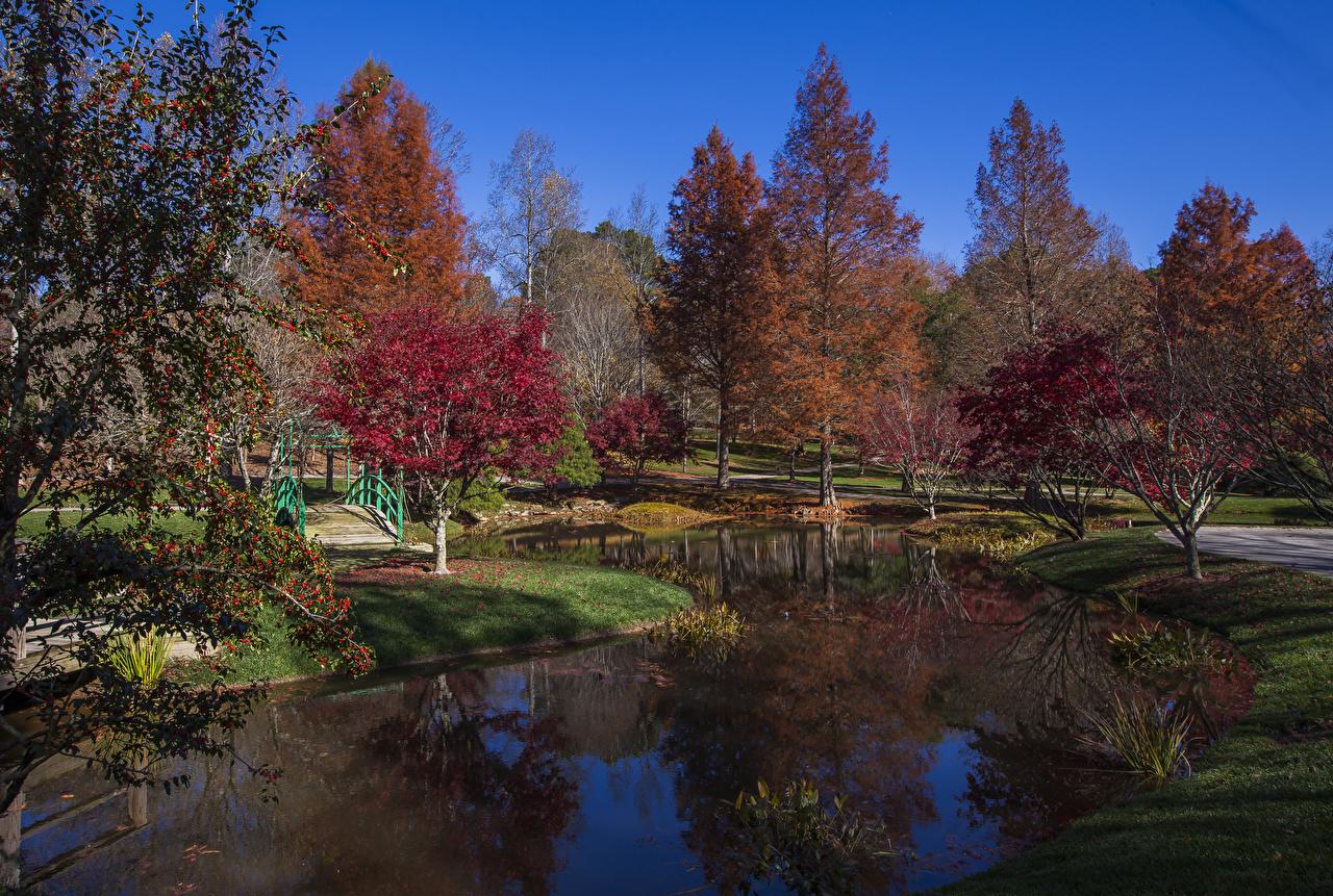 Картинки США Gibbs Gardens Природа осенние Пруд Сады Деревья штаты Осень дерево дерева деревьев