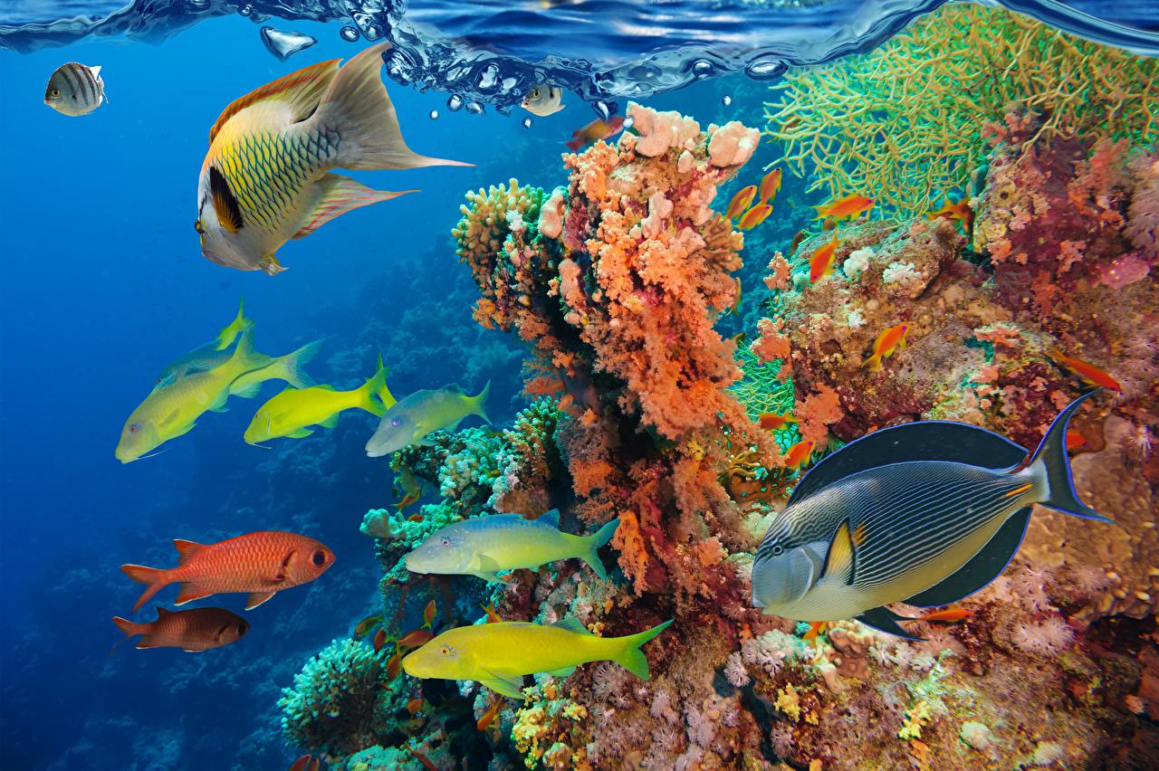 Фото Рыбы Подводный мир Кораллы Животные животное