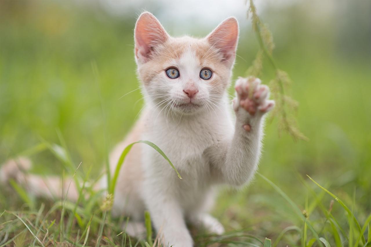 Фото Котята кошка Милые лап смотрят Животные котят котенка котенок кот коты Кошки милая милый Миленькие Лапы Взгляд смотрит животное