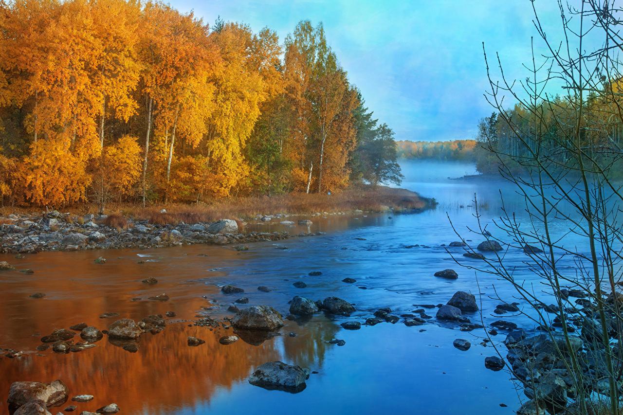 Фото осенние Природа лес Пейзаж Реки Камень дерево Осень Леса река речка Камни дерева Деревья деревьев