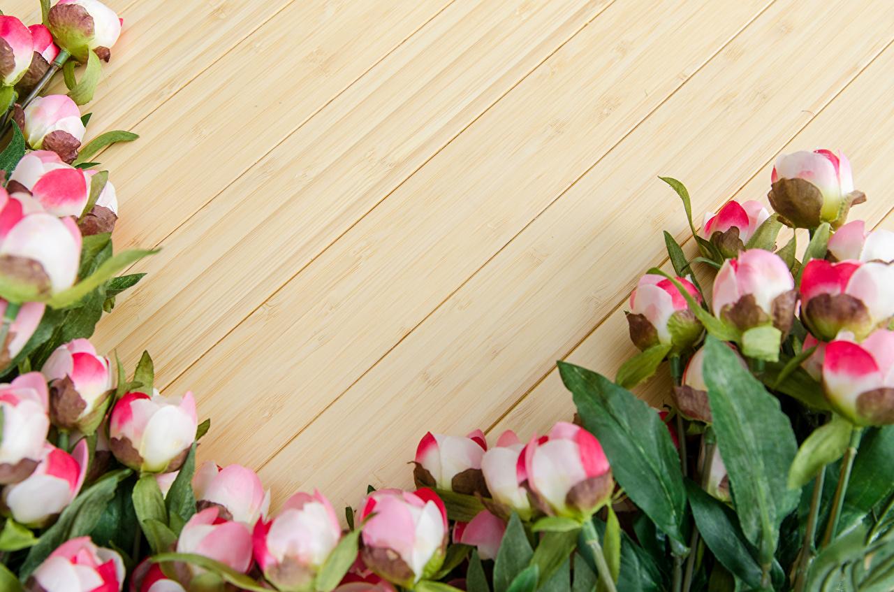 цветы для открытки картинки