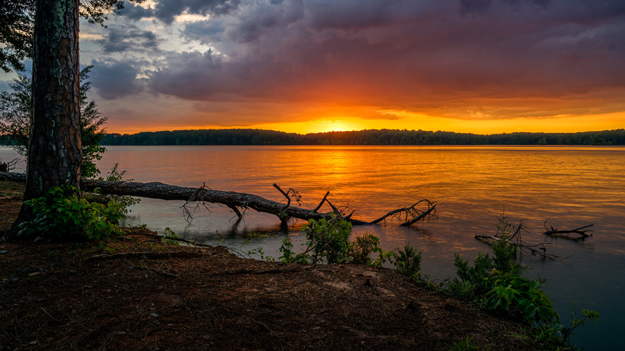 Фото штаты Glass Bridge Park Природа Парки Ствол дерева Рассветы и закаты речка США Реки