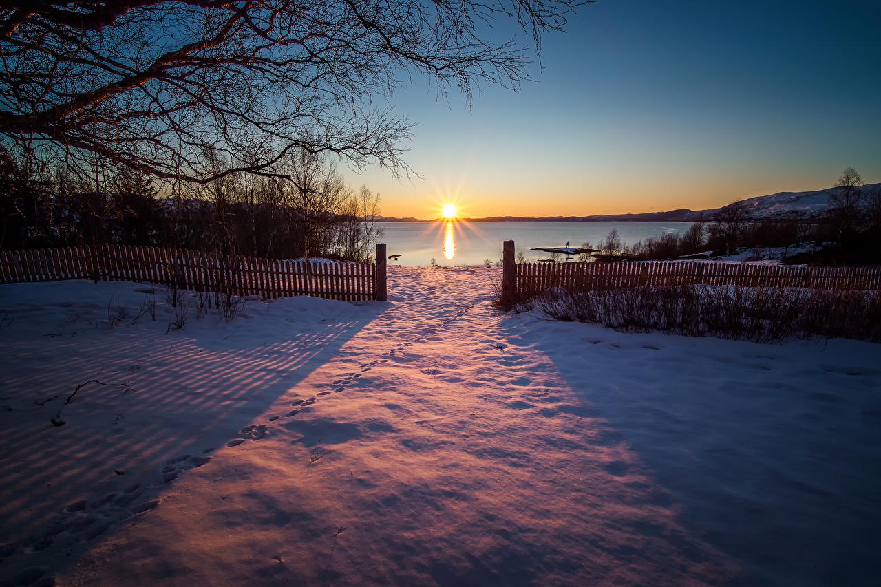 Фотография Норвегия Sulitjelma зимние Солнце Природа Снег Забор рассвет и закат ветка Зима солнца снега снегу снеге ограда забора забором Рассветы и закаты ветвь Ветки на ветке