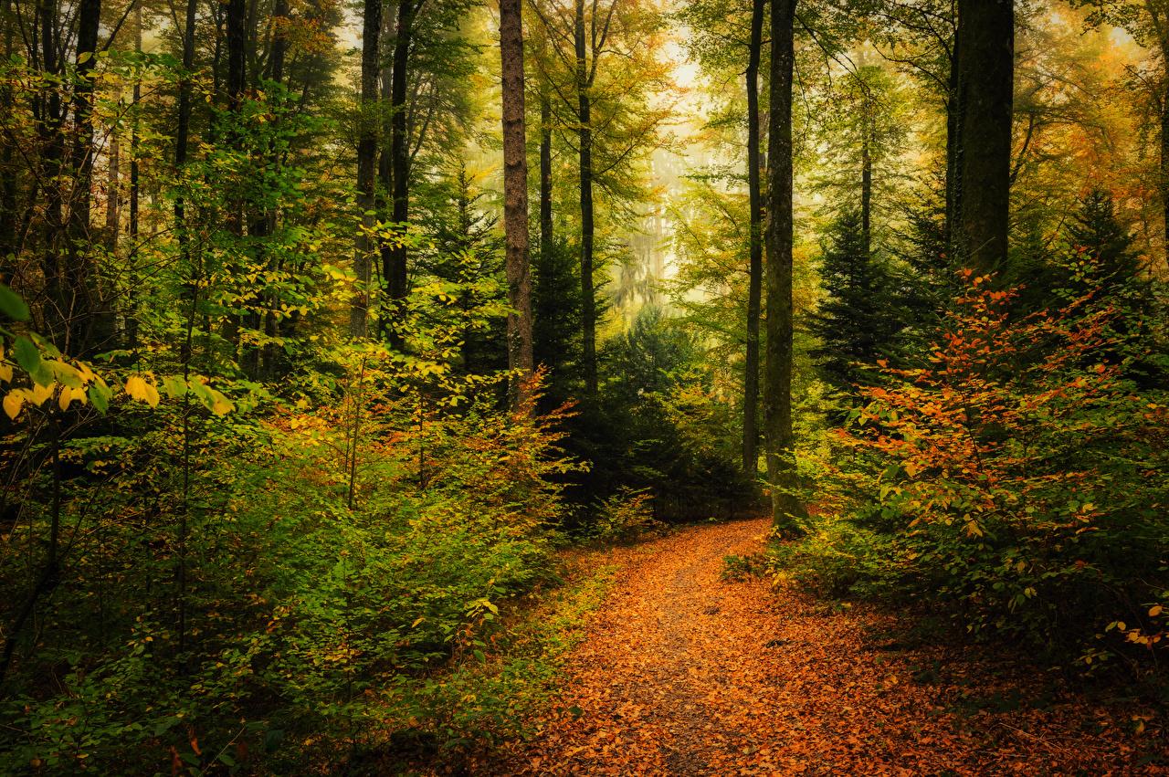 Фотографии Листья Осень Тропа Природа Леса Кусты дерева лист Листва тропы осенние тропинка лес кустов дерево Деревья деревьев