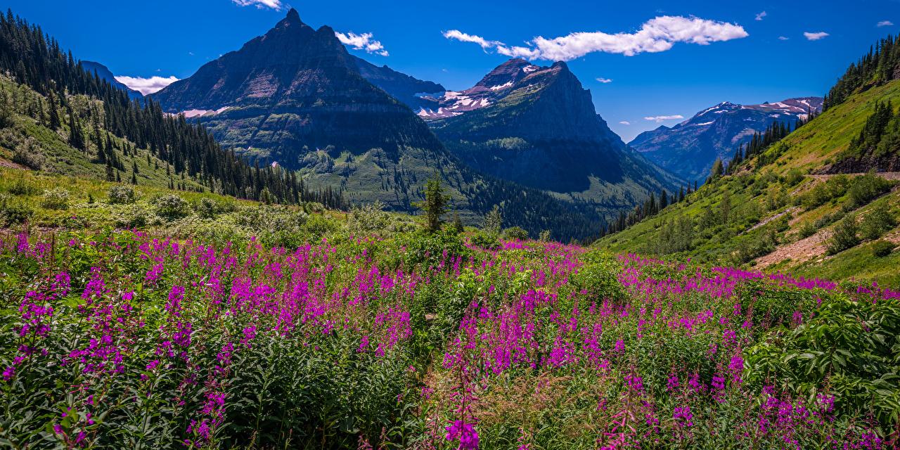 Фотографии Вашингтон США Панорама Glacier National Park Горы Природа Луга Парки Люпин Пейзаж штаты америка панорамная гора парк