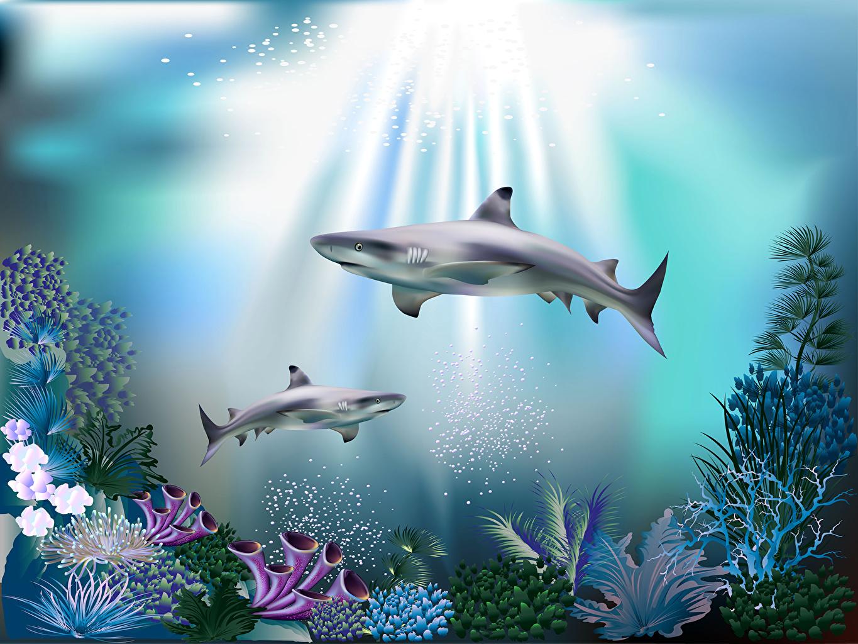 Картинка Лучи света Акулы Подводный мир Кораллы 3D Графика животное 3д Животные