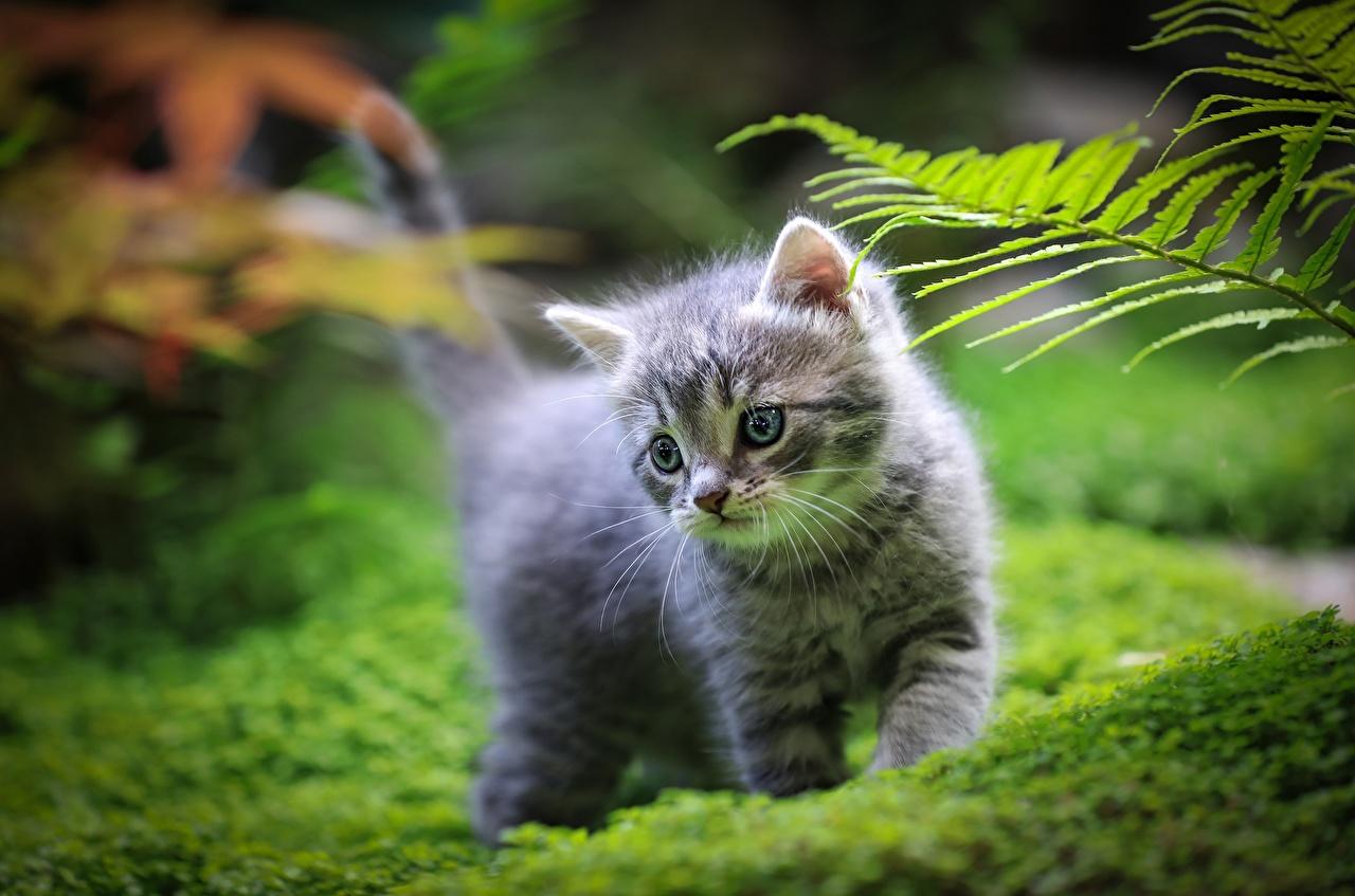 Картинки Котята кошка Размытый фон Трава животное котят котенка котенок кот коты Кошки боке траве Животные