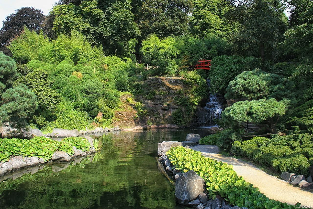 Фотография Германия Kaiserslautern Природа Сады Пруд