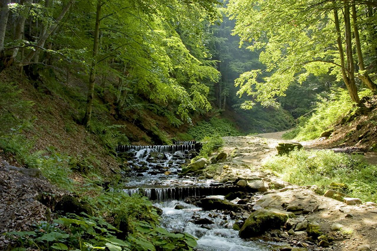Природа фото лес река