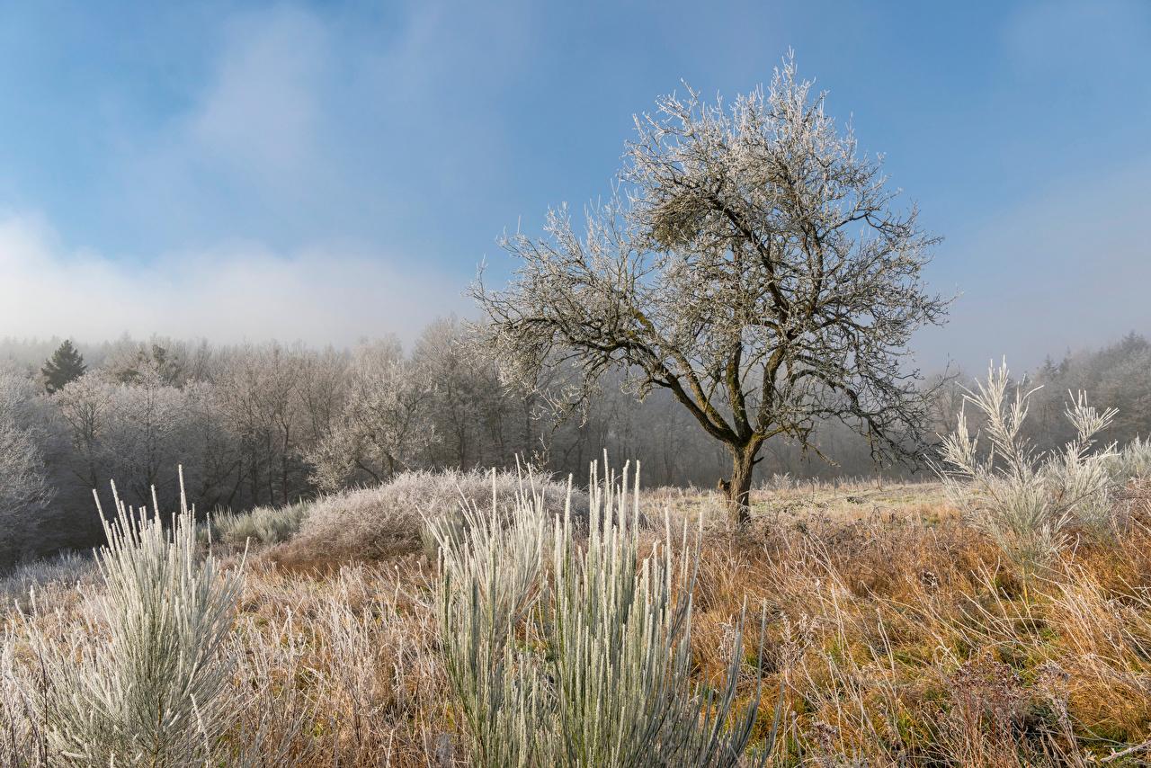 Обои для рабочего стола Германия Иней Hunsrück Природа Трава Деревья траве дерево дерева деревьев