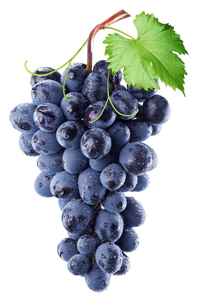 Картинка Виноград Пища Белый фон Крупным планом Еда Продукты питания вблизи