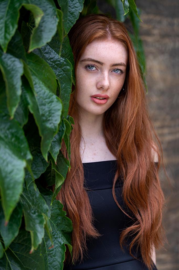 Фото Рыжая Листья Emilia волос молодая женщина смотрит  для мобильного телефона лист рыжие рыжих Листва Волосы девушка Девушки молодые женщины Взгляд смотрят
