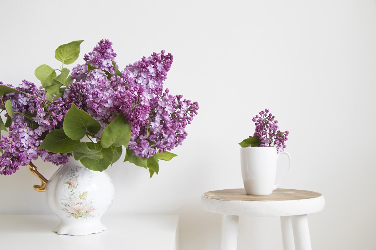 Картинки Круги Цветы Сирень вазы Белый фон круг окружность цветок Ваза вазе белом фоне белым фоном