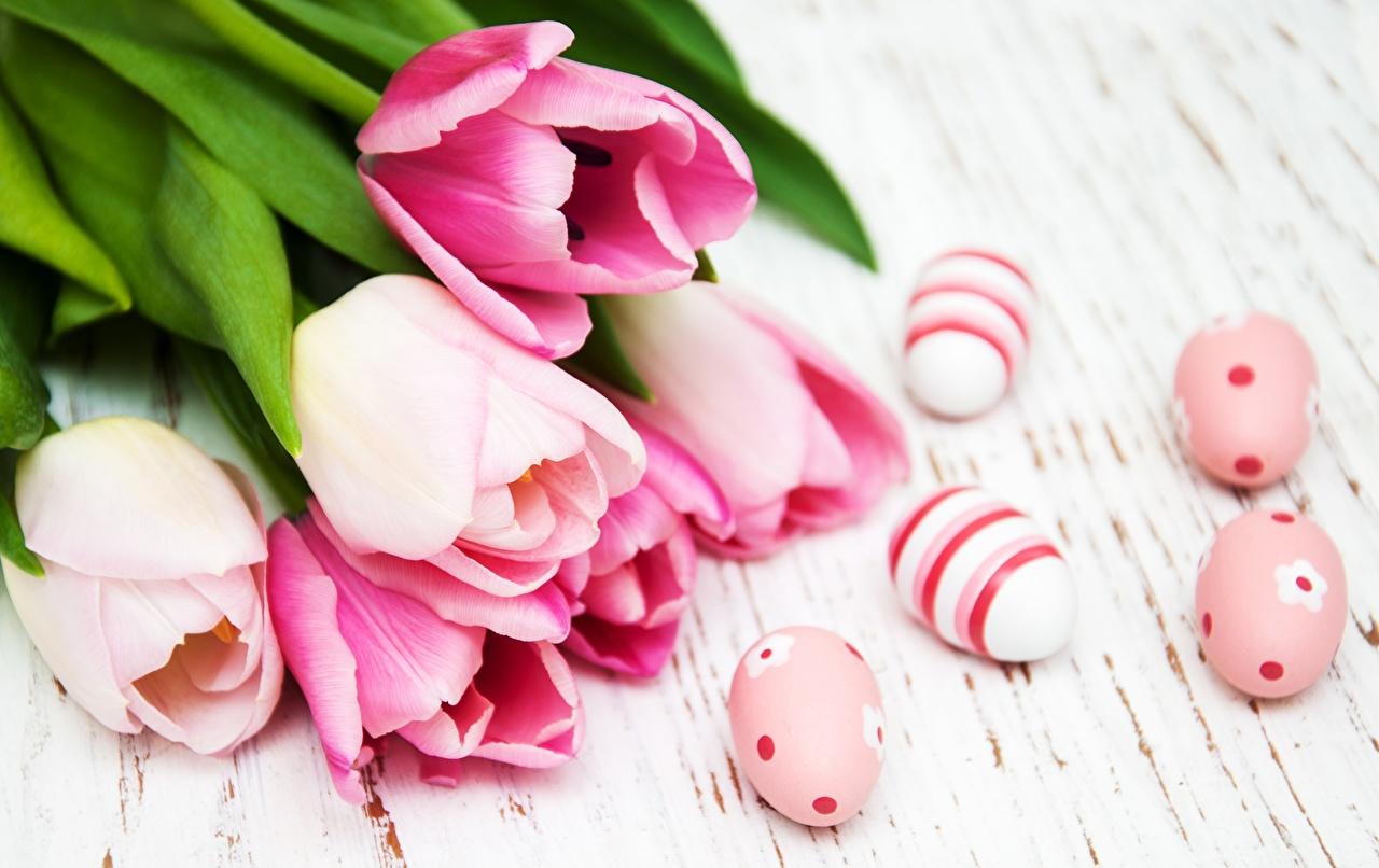 Обои для рабочего стола Пасха яйцами Розовый Тюльпаны Цветы яиц яйцо Яйца тюльпан розовая розовые розовых цветок