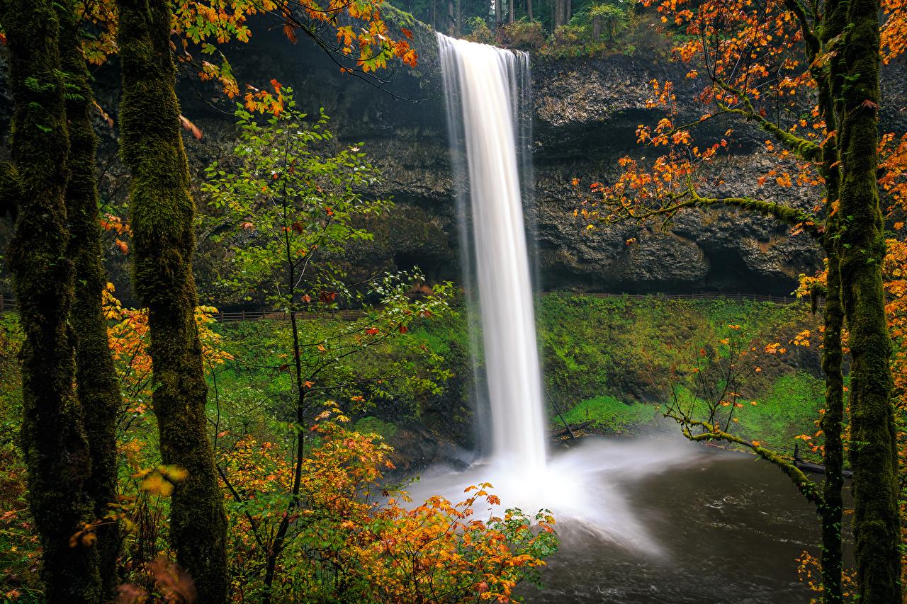 Фотография США Silver Falls State Park Oregon Утес Природа осенние Водопады парк Ствол дерева мха штаты америка скалы скале Скала Осень Парки Мох мхом