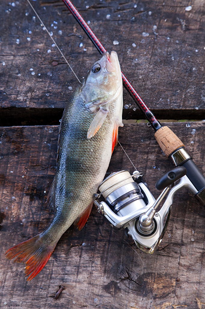 Фотография Спорт ловля рыбы Рыба Удочка  для мобильного телефона Рыбалка спортивный спортивные спортивная