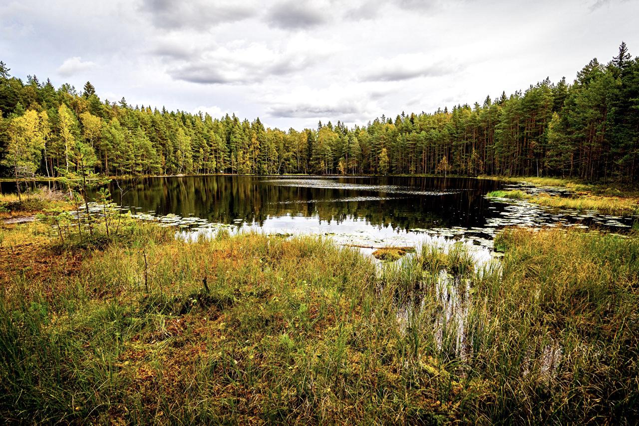 Обои для рабочего стола Хельсинки Финляндия Sipoonkorpi National Park Осень Природа лес Парки Озеро Трава осенние парк Леса траве