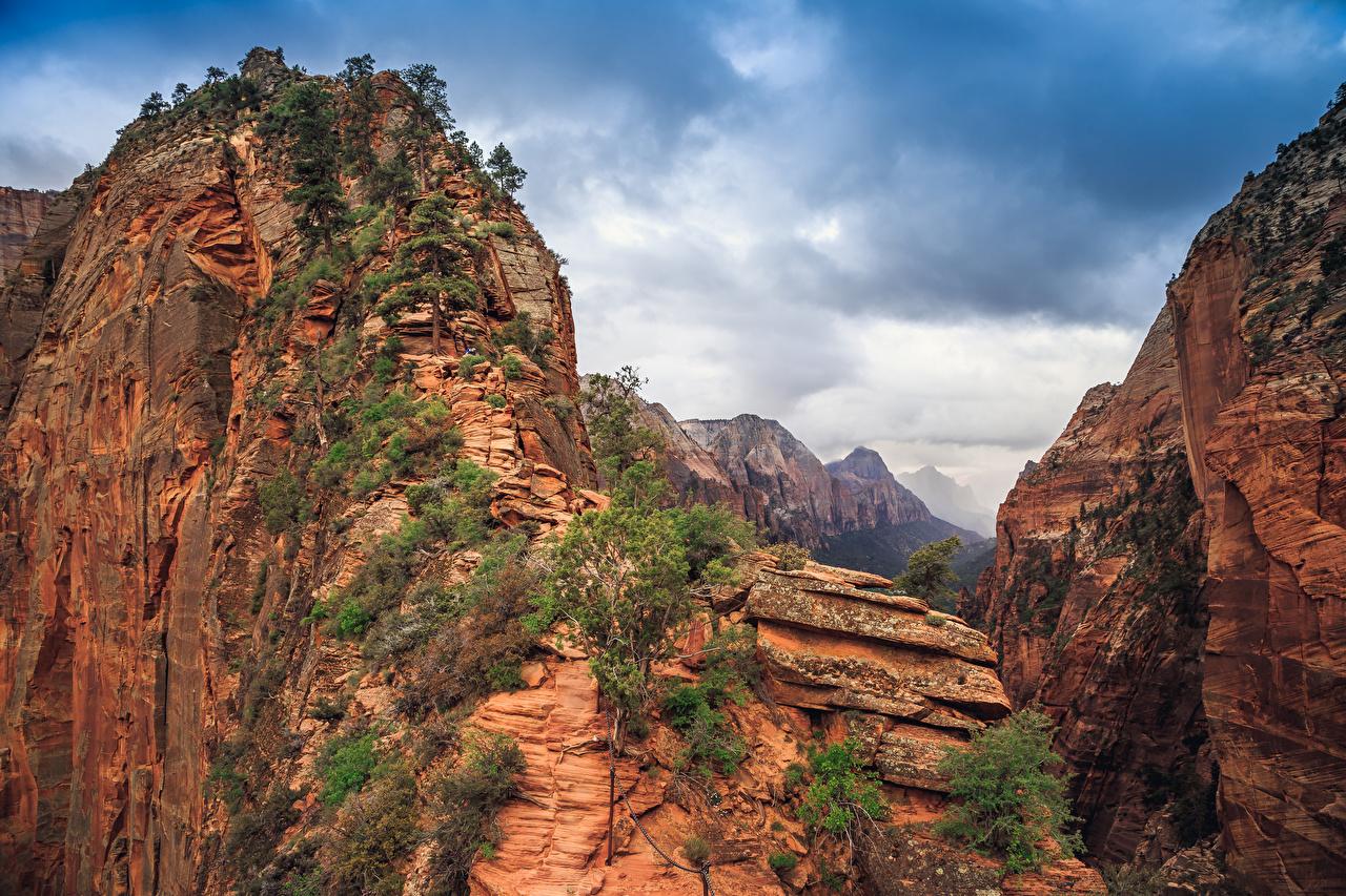 Картинка Зайон национальнай парк штаты скале Природа каньона парк Деревья США америка Утес скалы Скала Каньон каньоны Парки дерево дерева деревьев