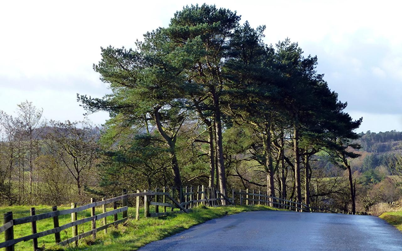 Фотографии Природа Дороги ограда деревьев Забор забора забором дерево дерева Деревья