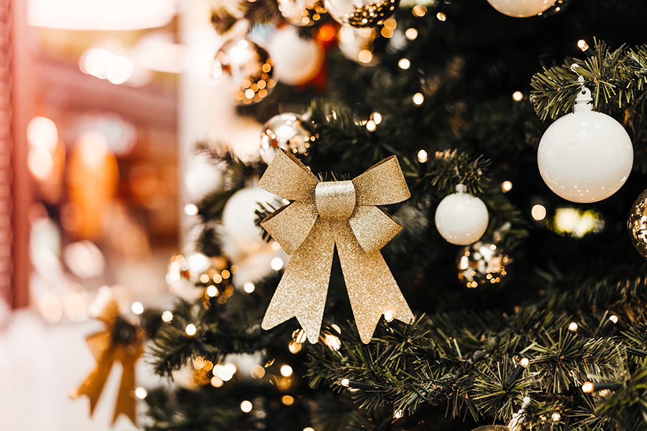 Фотографии Рождество Елка Шар Бантик Новый год Новогодняя ёлка бант Шарики бантики